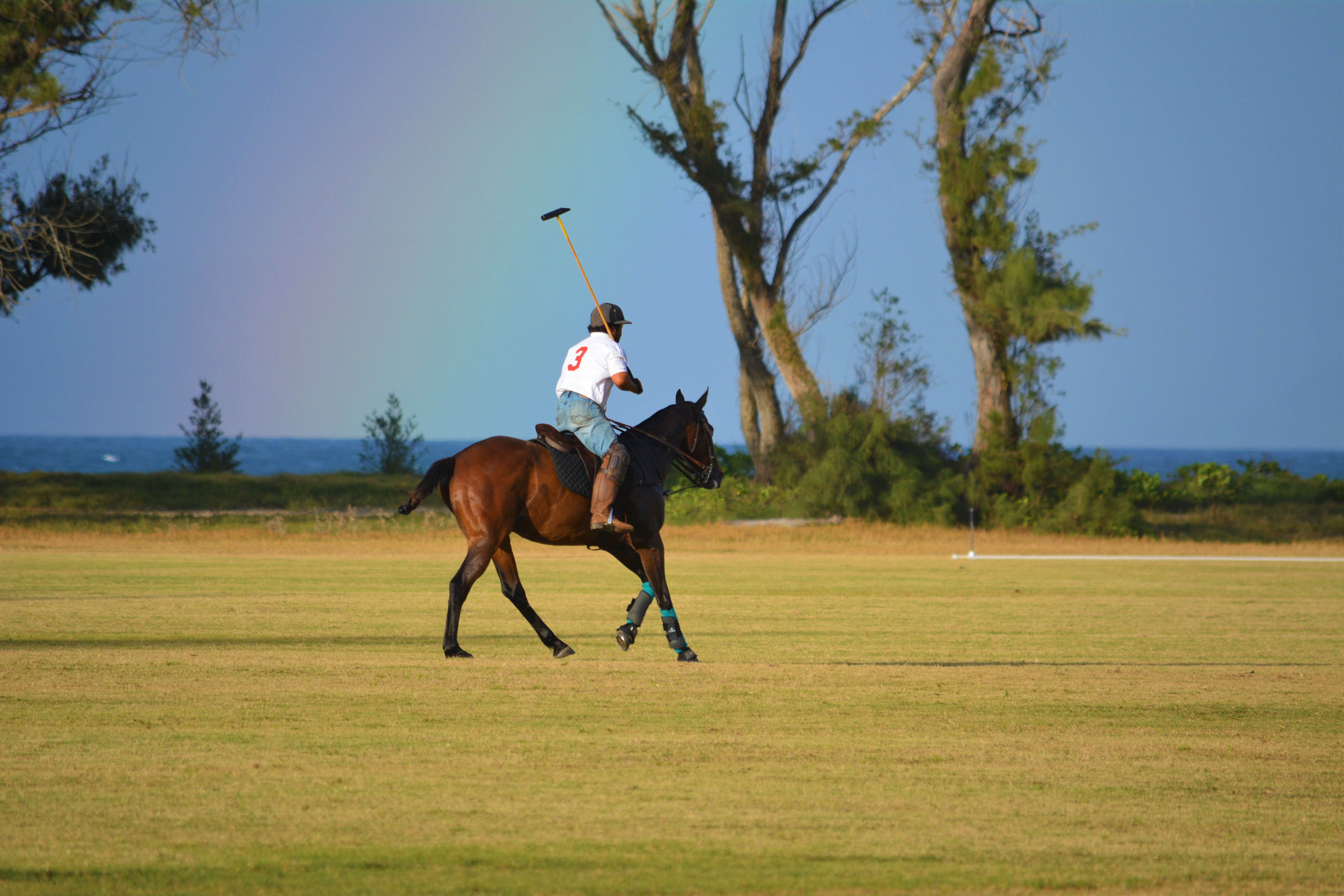 Horses, Mallets - The game of Polo