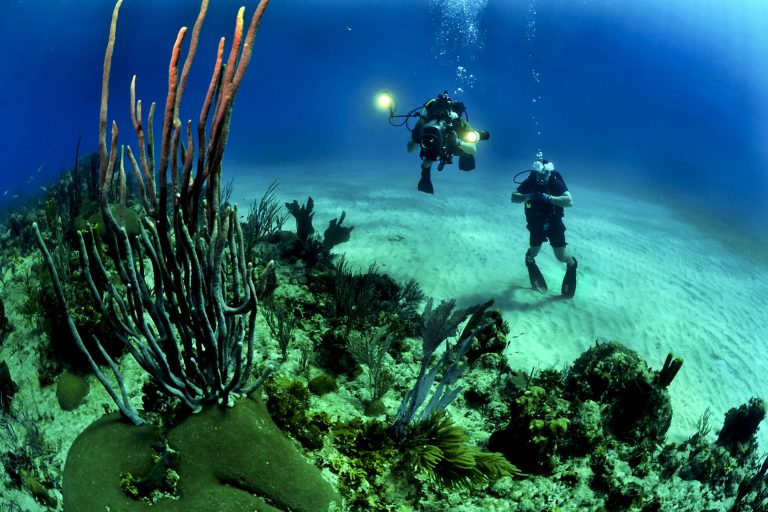 Scuba diving is fun with deep sea exploration and underwater flora and fauna. Book this adventure activity on togedr.com to experience the ultimate rush.