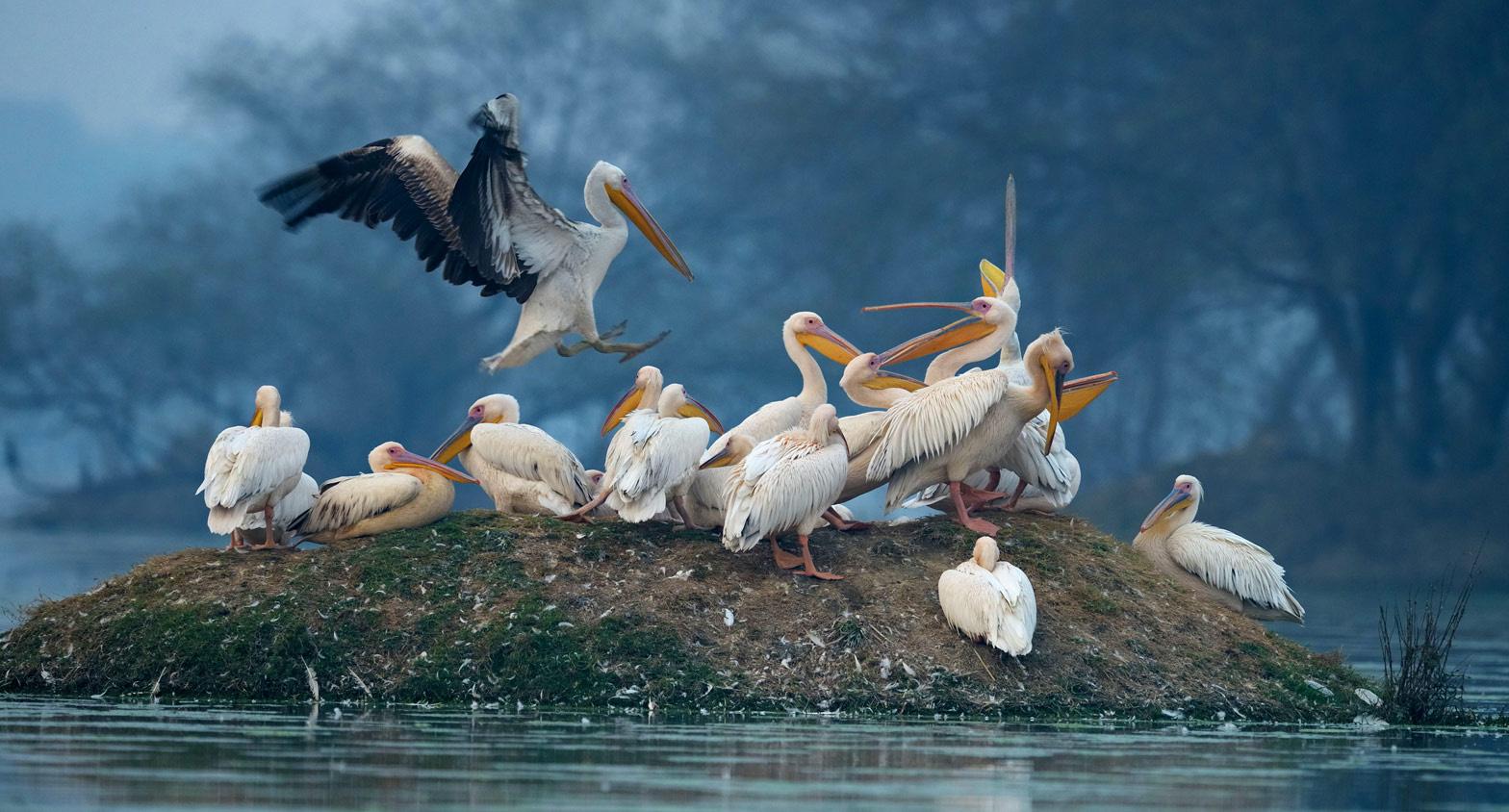 togedr-bird-sanctuary
